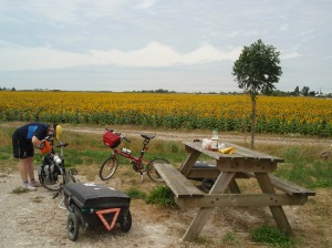 Bike Fridays and Sunflowers