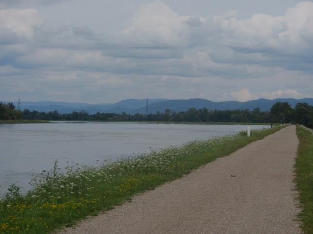 Rhine track