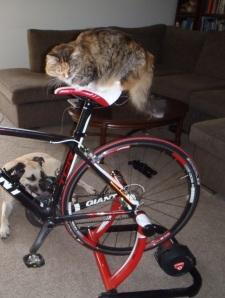 mittens bike